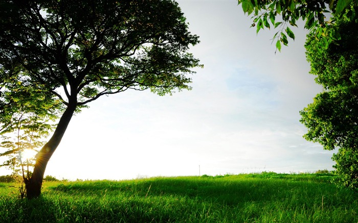 green grass and trees-Beautiful scenery wallpaper Views:5782