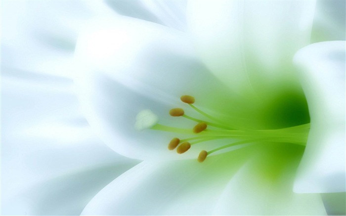 lily-beautiful flowers Picture wallpaper Views:4686