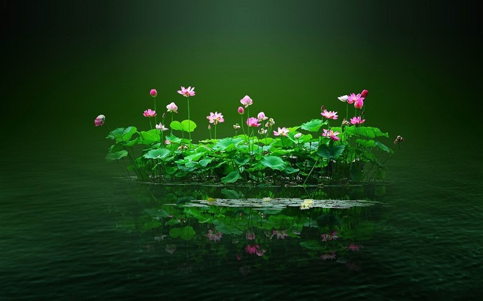 swamp flowers and water-beautiful flowers Picture wallpaper Views:3349