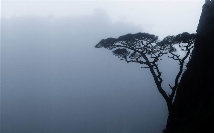 tree on a mountain side-amazing natural scenery wallpaper Views:3709 Date:1/5/2013 10:51:11 PM