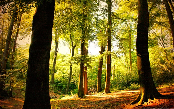Beech trees forest Wuppertal Germany-natural landscape HD wallpaper Views:11613