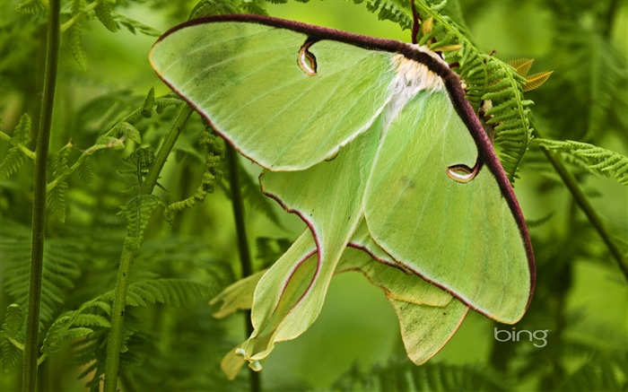 Butterfly-shaped leaves-2013 Bing widescreen wallpaper Views:10802