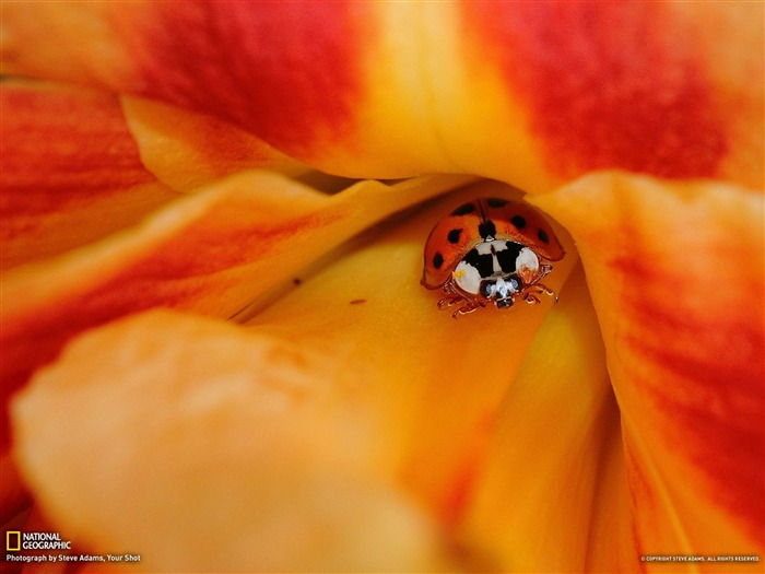 National Geographic January Photo of the Day Photography Wallpapers Views:6614