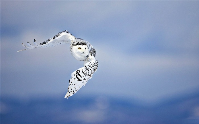 Owl HD-Animal world photography wallpaper Views:9736 Date:2/15/2013 12:49:10 PM