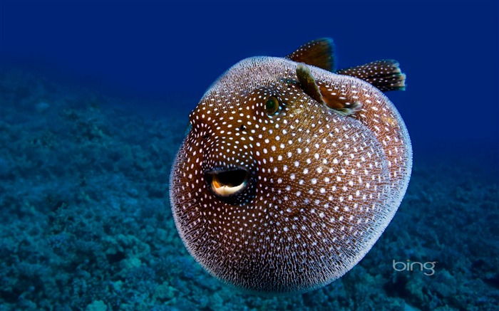 Undersea creatures-2013 Bing widescreen wallpaper Views:4599