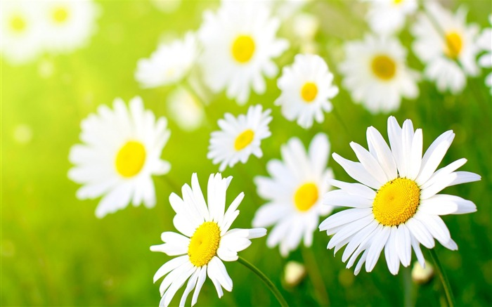 Gorgeous spring flowers HD widescreen wallpaper Views:16728