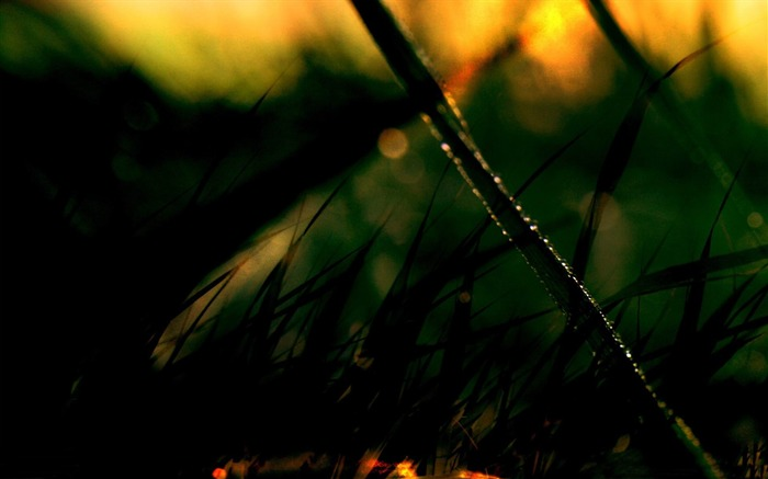 early morning dew-Quality photography wallpaper Views:4363 Date:2/2/2013 11:48:02 PM
