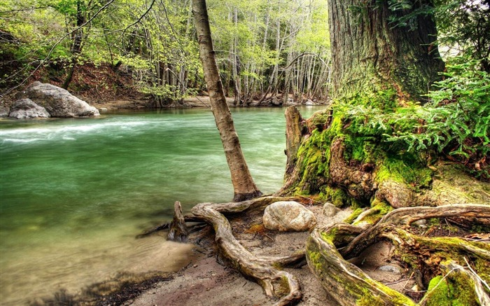 fast river in the forest-Natural landscape widescreen wallpaper Views:4212