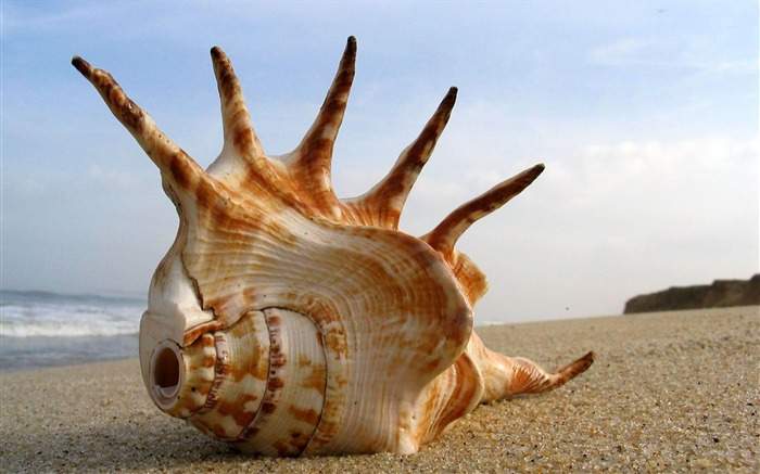 seashell-Quality photography wallpaper Views:4745 Date:2/2/2013 11:35:34 PM