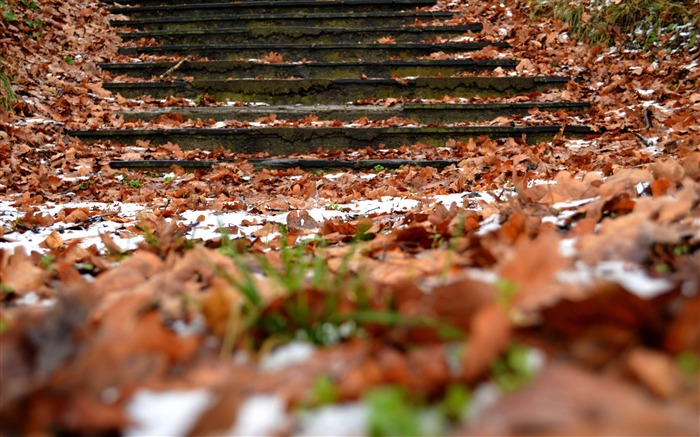 autumn steps foliage snow-Natural landscape HD wallpaper Views:4122