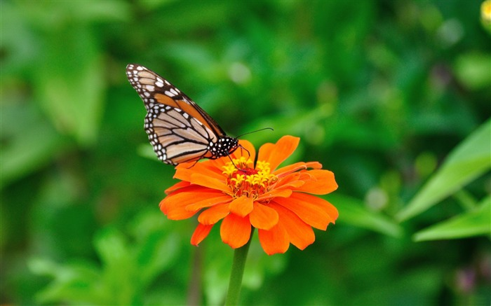 butterfly-Animal World HD wallpaper Views:5487 Date:3/3/2013 10:09:44 PM