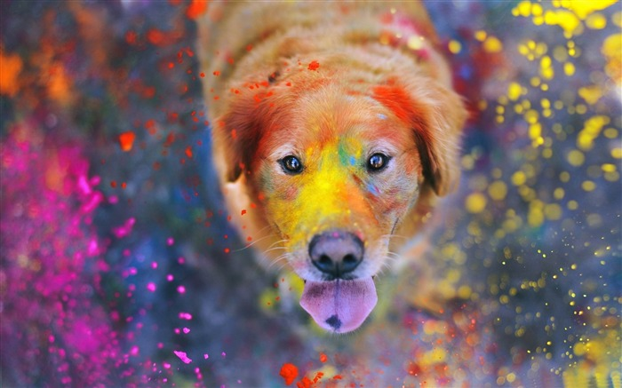 colorful dust-Animal World HD wallpaper Views:7352 Date:3/3/2013 10:06:50 PM