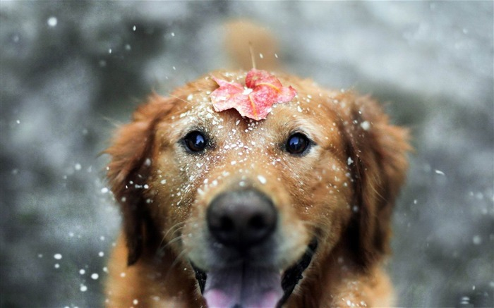 let the winter begin-Animal World HD wallpaper Views:6015 Date:3/3/2013 10:16:44 PM