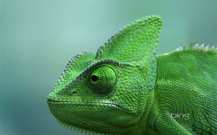 green chameleon widescreen wallpaper - photo #1