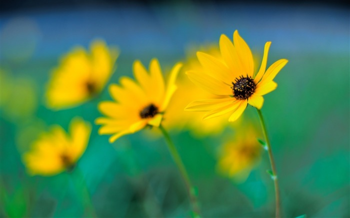 Hazy yellow flowers-flower photography wallpaper Views:3383