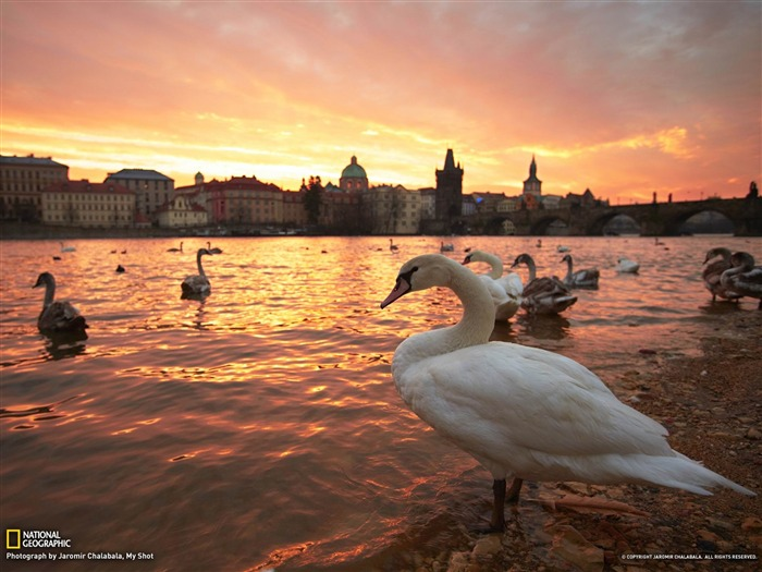 National Geographic April Photo of the Day Photography Wallpaper Views:7059