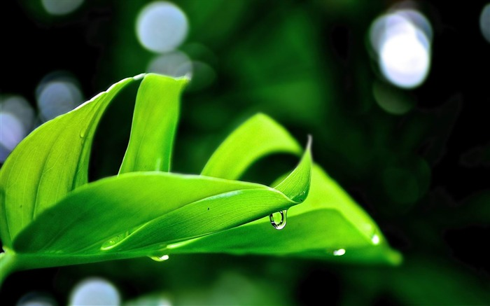 droplet on leaf-Plant Photography widescreen wallpaper Views:3466