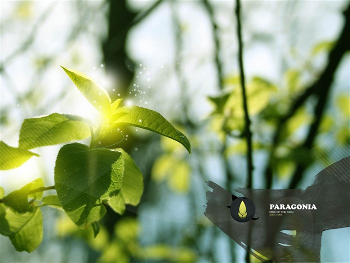 green branch-creative design HD wallpaper Views:3557