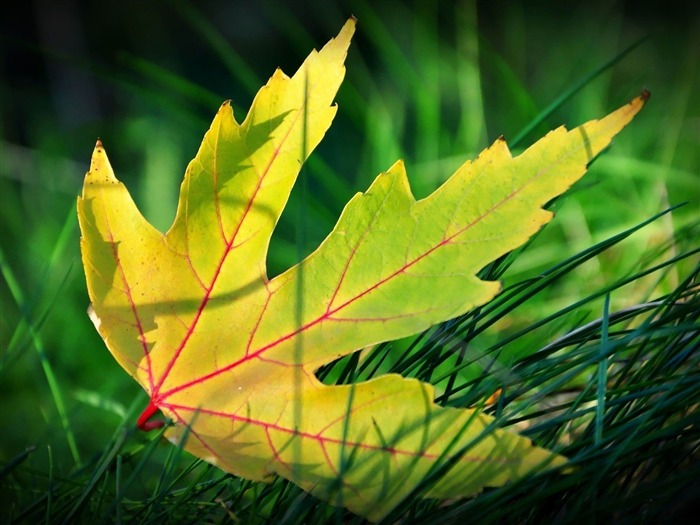 green leaf in the grass-Plant Photography widescreen wallpapers Views:3730