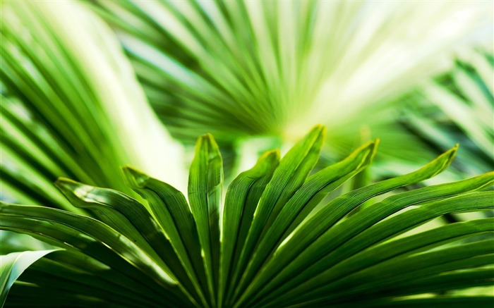 green plant-Plant Photography widescreen wallpapers Views:3952