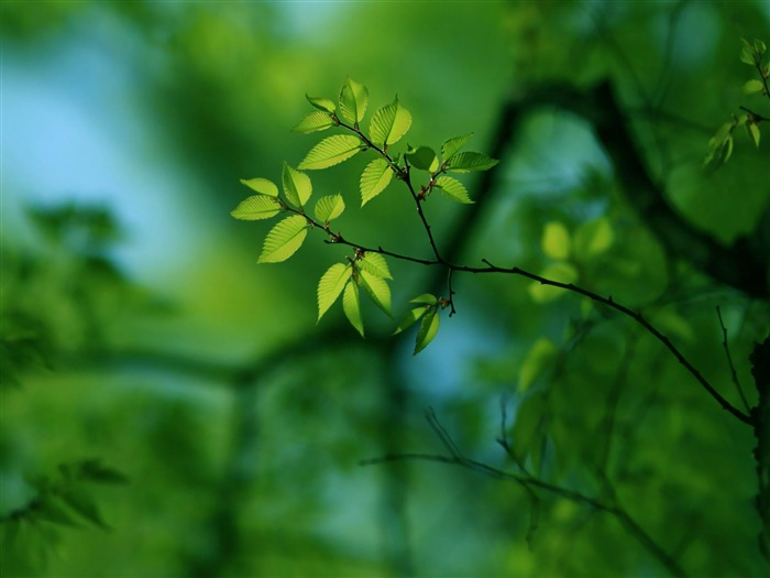green tree-Plant Photography widescreen wallpapers Views:4910