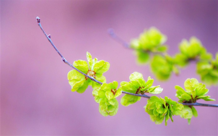 small green flowers-Plant Photography widescreen wallpapers Views:3633 Date:4/5/2013 12:07:20 PM
