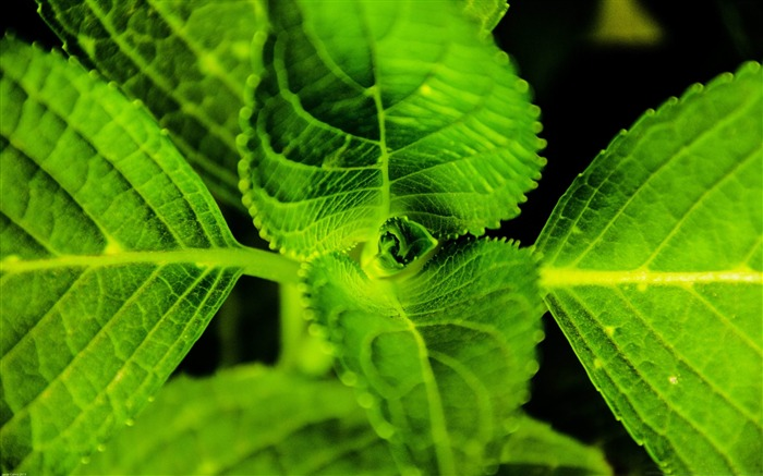 symmetric plant-Plant Photography widescreen wallpapers Views:3840 Date:4/5/2013 12:08:50 PM
