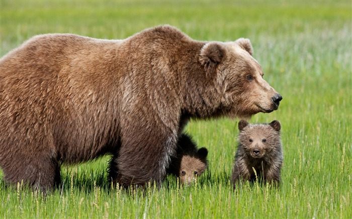 Cute bear-Animal World Photography Wallpaper Views:5541 Date:5/1/2013 11:51:08 PM