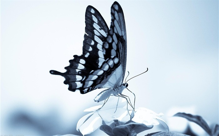 Gray butterfly-Animal World Photography Wallpaper Views:5325 Date:5/1/2013 11:57:37 PM