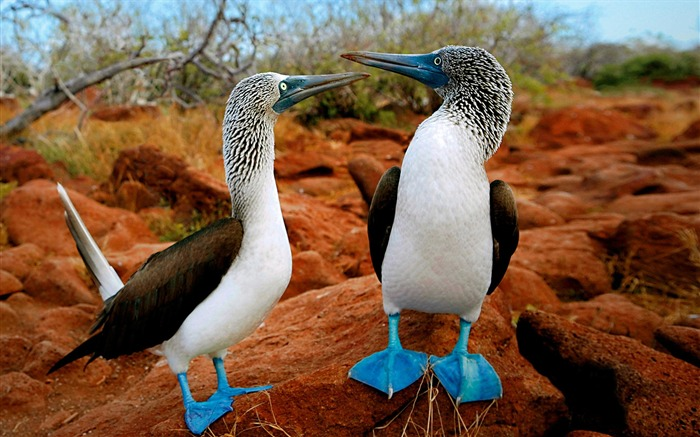 Lovely birds-Animal World Photography Wallpaper Views:4299 Date:5/1/2013 11:59:54 PM