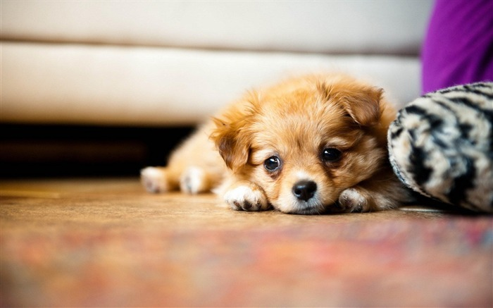 Rest puppy-Animal World Photography Wallpaper Views:5540 Date:5/1/2013 11:49:06 PM