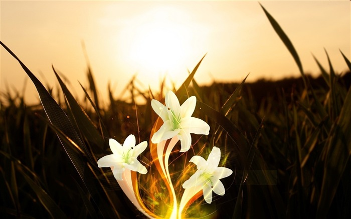 flowers white orange field light-Abstract design wallpaper Views:2646