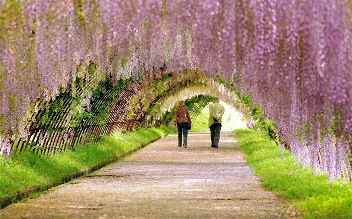 garden spring people walk flowering-landscape widescreen wallpaper Views:5340