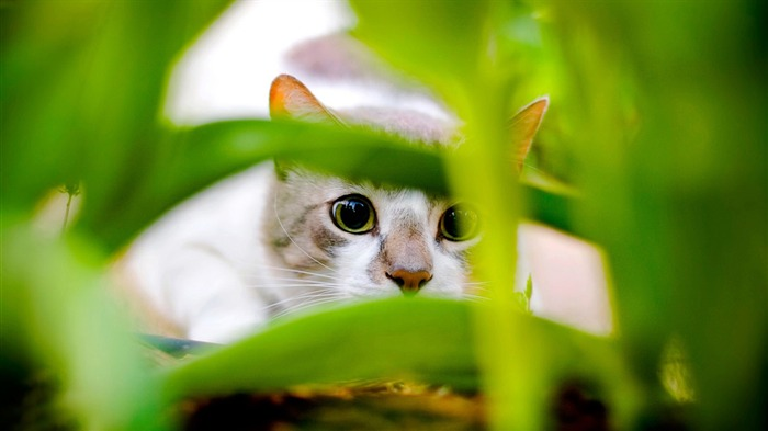 hiding cat-Animal World Photography wallpaper Views:3033