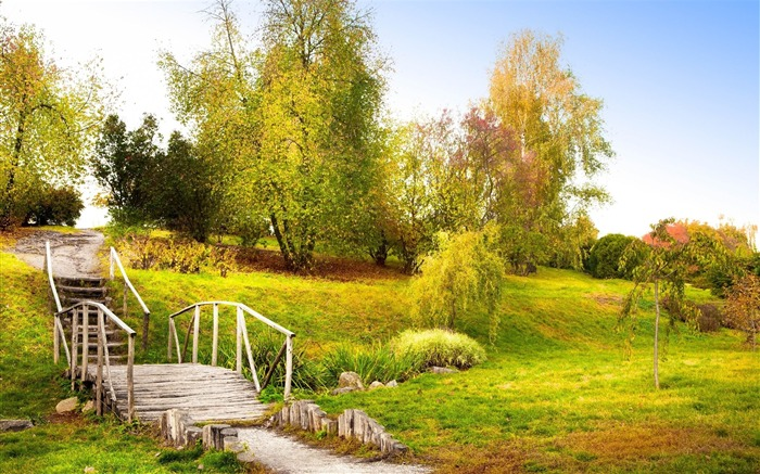 ladder steps summer green trees grass handrail-landscape widescreen wallpaper Views:4403