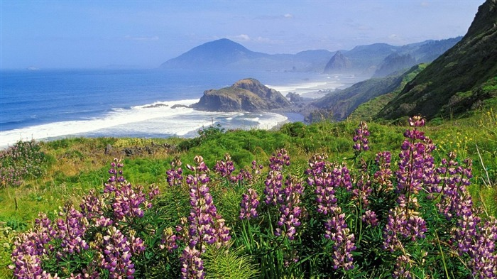 mountains coast sea waves flowers greens-landscape widescreen wallpaper Views:3530