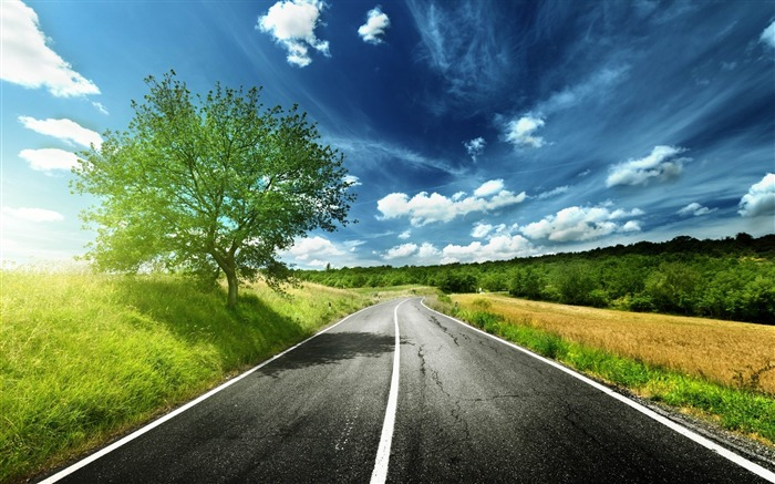 road asphalt line tree-landscape widescreen wallpaper Views:5166