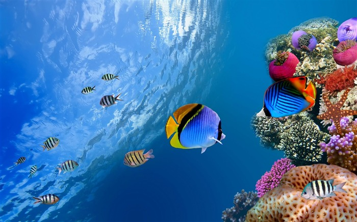 underwater coral scene-May HD quality wallpaper Views:12698