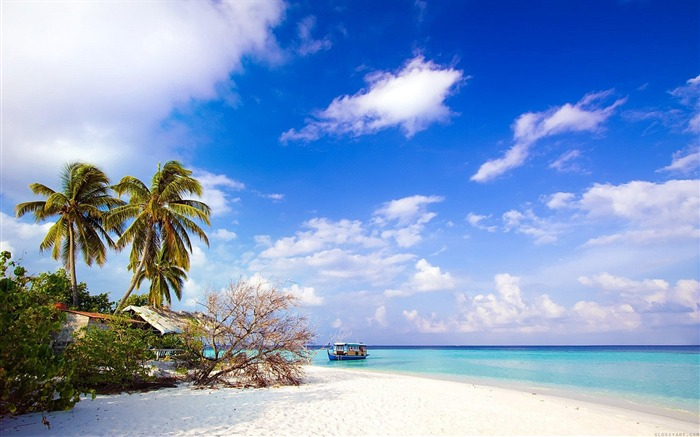 Beach with palm trees-Summer landscape wallpaper 01 Views:3310