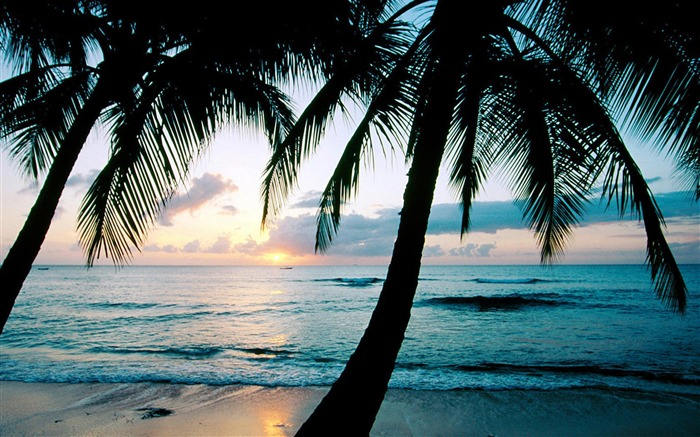 Beach with palm trees-Summer landscape wallpaper 02 Views:4500