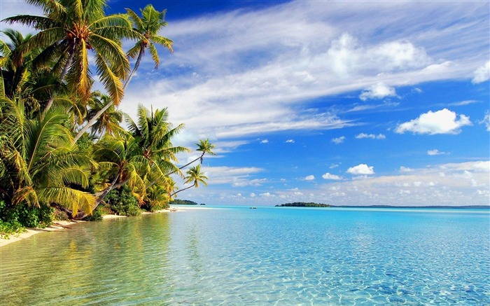 Beach with palm trees-Summer landscape wallpaper Views:27889
