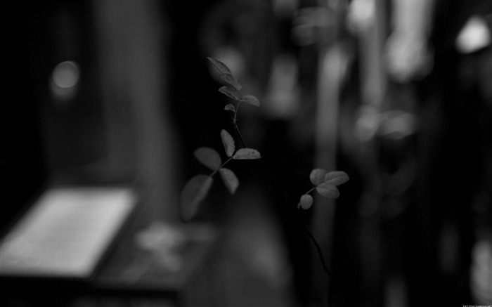 Black and white glass window-Life photography HD wallpaper Views:5644 Date:6/15/2013 12:17:06 AM
