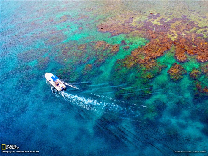 Coral Reef Honduras-National Geographic wallpaper Views:5025