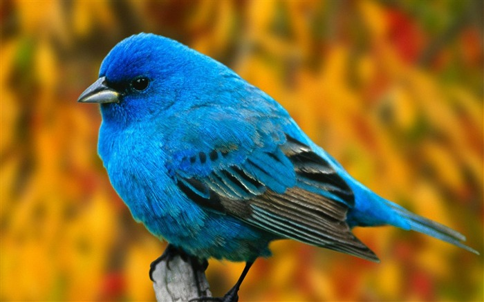 Nature bird photography theme HD wallpaper Views:27997