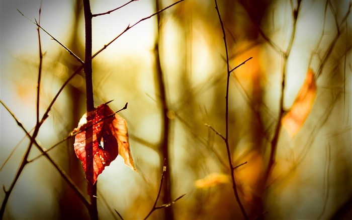 leafless twigs-Macro photography wallpaper Views:3981