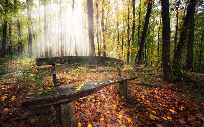old timber bench-Landscape photography wallpaper Views:3623