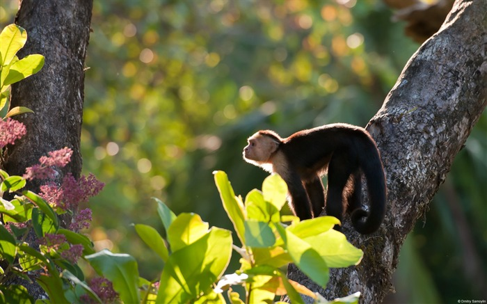 Bald capuchins-Windows themes wallpaper Views:5973 Date:7/6/2013 5:43:26 PM