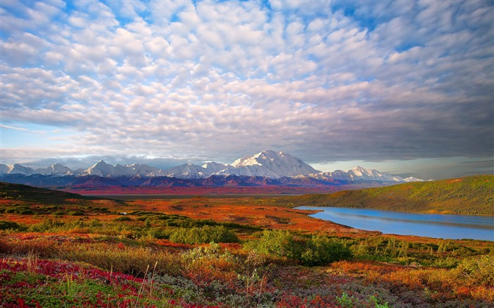 Denali National Park Beautiful Landscape HD Wallpaper Views:18398