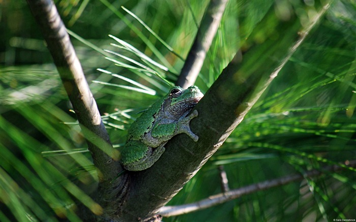 Gray tree frog-Windows themes wallpaper Views:5451 Date:7/6/2013 5:47:49 PM