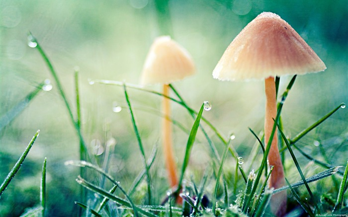 Mushrooms-Windows themes wallpaper Views:9404 Date:7/6/2013 5:48:49 PM